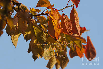 Photograph - Autumn Leaves by Terri Waters