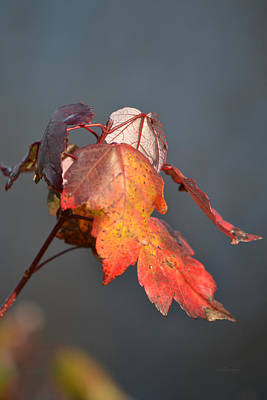 Photograph - Autumn Leaves That Have Not Given Up by rd Erickson