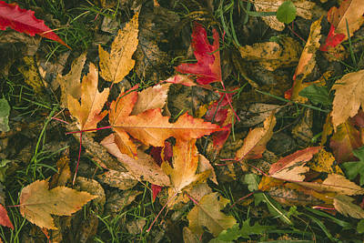 Fallen Leaf Photograph - Autumn Leaves by Thubakabra