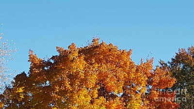 Photograph - Autumn Leaves Treetop Blue Sky by Michelle Jacobs-anderson