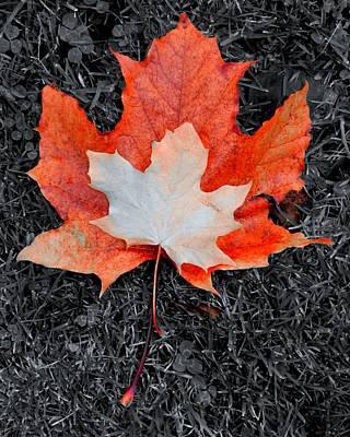 Autumn Leaves Two #3 Art Print