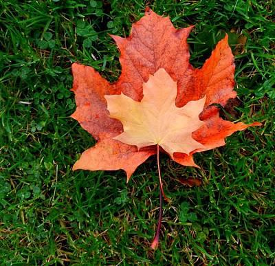 Autumn Leaves Two Art Print
