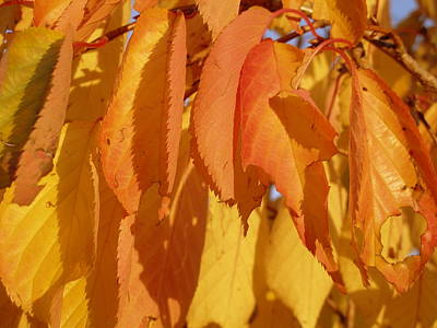 Photograph - Autumn Leaves Us All by Michael Canning