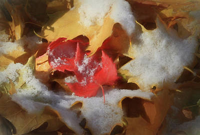 Photograph - Autumn Leaves With Snow by Donna Kennedy