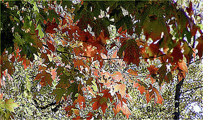 Photograph - Autumn Leaves by Yvonne Blasy
