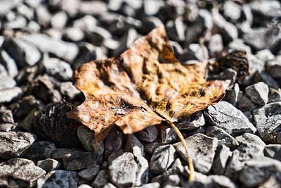 Photograph - Autumn Life by Sharon Popek