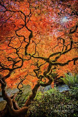 Photograph - Autumn Light 2 by Sonya Lang