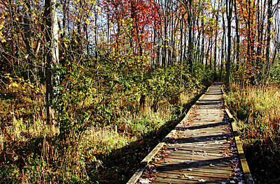 Photograph - Autumn Light And Shadow by Debbie Oppermann