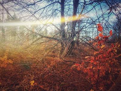 Photograph - Autumn Light by Andy Walsh