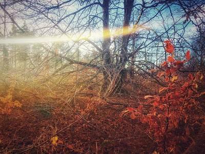 Photograph - Autumn Light by No Alphabet