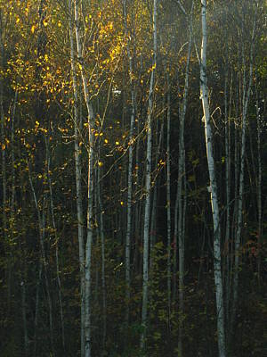 Photograph - Autumn Light by Bill Tomsa