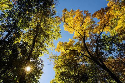 Photograph - Autumn Light by Fran Gallogly