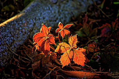 Photograph - Autumn Light by HH Photography of Florida