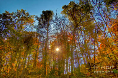 Photograph - Autumn Light by Kerri Farley