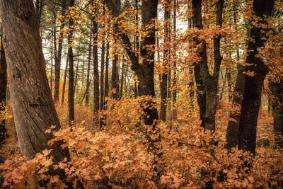 Photograph - Autumn Light  by Saija Lehtonen