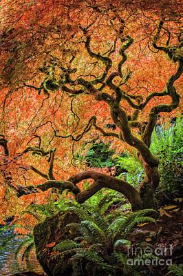 Photograph - Autumn Light by Sonya Lang