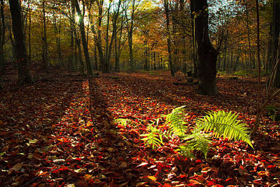 Photograph - Autumn Light by Will Gudgeon