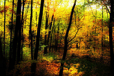 New Hampshire Tours Photograph - Autumn Light by William Carroll