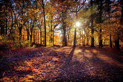 Photograph - Autumn Lights 1 by Lilia D