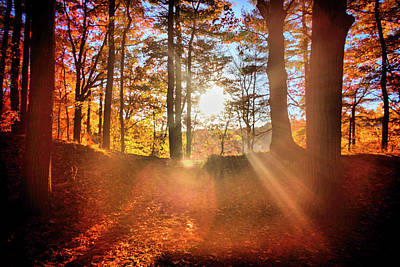 Photograph - Autumn Lights by Lilia D
