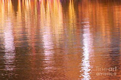 Photograph - Autumn Lines by Aimelle