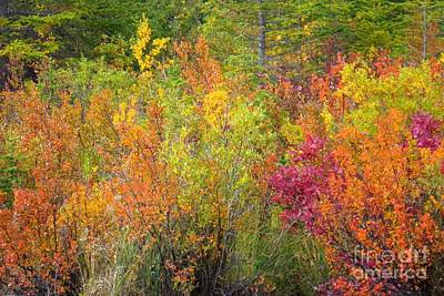 Photograph - Autumn Magic by Frank Townsley