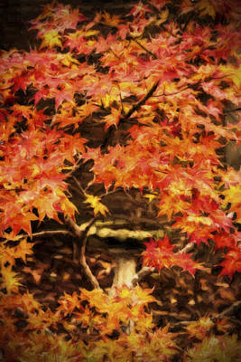 Photograph - Autumn Maple by Barry Jones