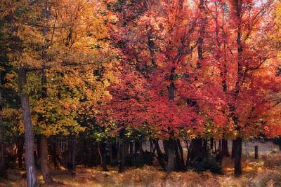 Photograph - Autumn Maple Forest  by Saija Lehtonen