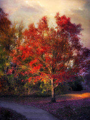 Rural Landscapes Photograph - Autumn Maple by Jessica Jenney