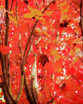 Photograph - Autumn Maple by Kathy Bassett
