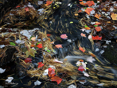 Photograph - Autumn Maple Leaves by Tim Fitzharris