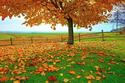 Photograph - Autumn Maple Tree And Leaves by Gary Corbett