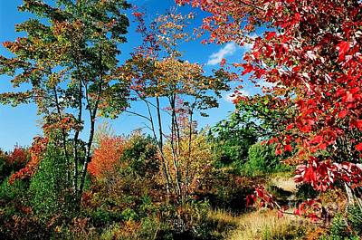 Photograph - Autumn Maples by Frank Townsley