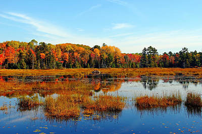 Photograph - Autumn Marsh by Debbie Oppermann