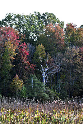 Photograph - Autumn Marsh In Color by Skip Willits