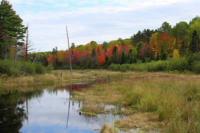 Photograph - Autumn Marsh View by Brook Burling