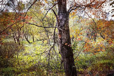 Autumn Meadow Art Print by Debra and Dave Vanderlaan