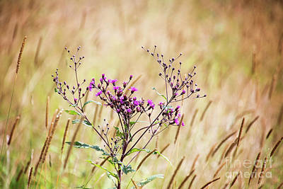 Photograph - Autumn Meadow Grass by Sharon McConnell