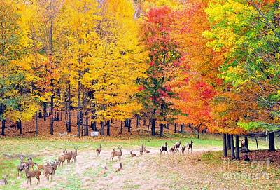 Photograph - Autumn Meadow by Terri Gostola