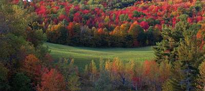 Photograph - Autumn Meadow by Todd Rojecki