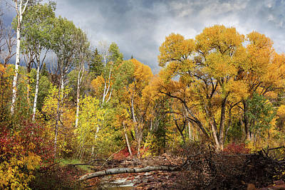 Photograph - Autumn Medley Along The Creek by Kathleen Bishop
