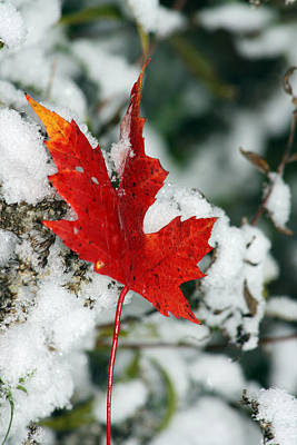 Photograph - Autumn Meets Winter by Cathy Beharriell