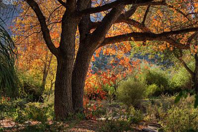 Photograph - Autumn Memories by Sue Cullumber