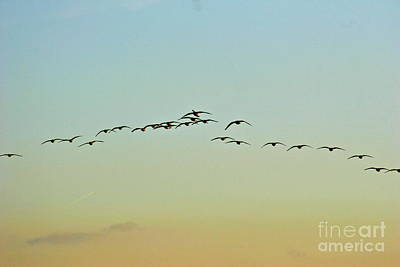 Lightscapes Photograph - Autumn Migration by Sean Griffin