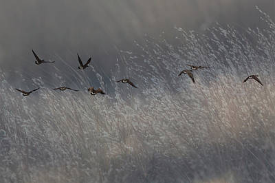 Photograph - Autumn Migration by Steve Gravano