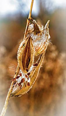 Photograph - Autumn Milkweed 12 - Vignette by Steve Harrington