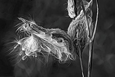Photograph - Autumn Milkweed 16 - Paint Bw by Steve Harrington