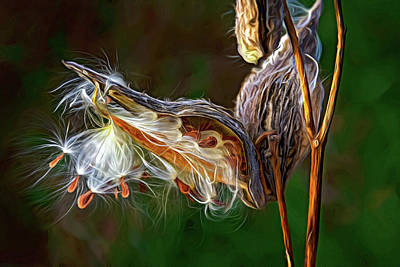 Photograph - Autumn Milkweed 16 - Paint by Steve Harrington