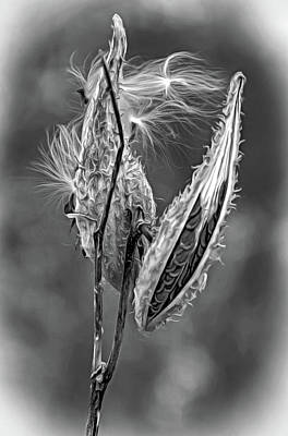 American West - Autumn Milkweed 8 - Paint bw by Steve Harrington