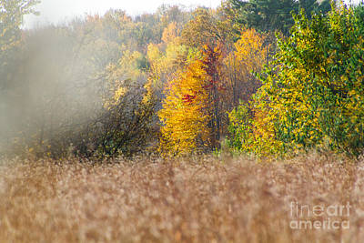 Photograph - Autumn Mist by CJ Benson